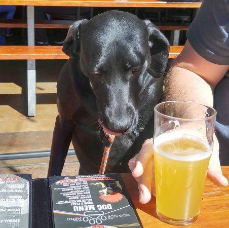 Overland Park, KS: Kimber ordering from the Dog Menu.