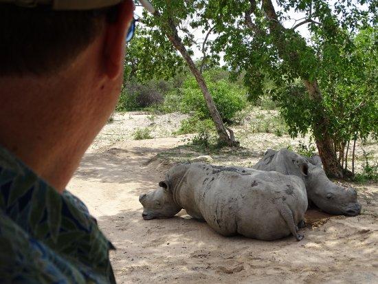 Hoedspruit, Sydafrika: Really close to the rhinos