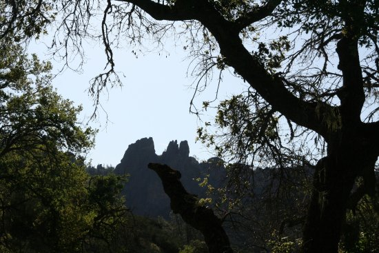 Paicines, CA: View through the trees