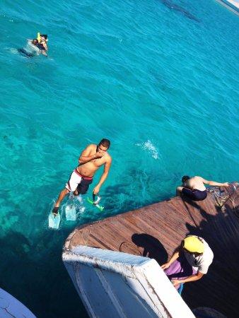 Careless Reef : en el mar la vida es más sabrosa