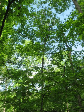 Lithia Springs, GA: Looking up from a resting bench on path to Old Mill.