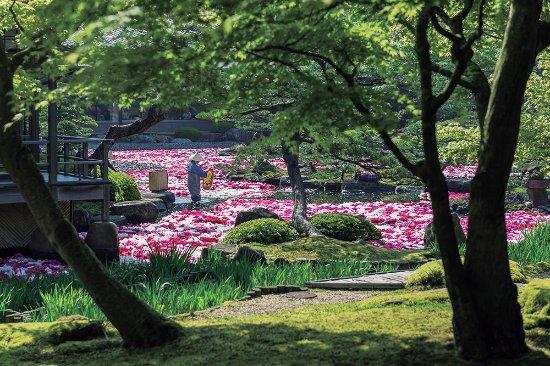 Matsue, Japan: 池泉牡丹
