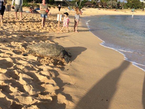 Poipu Beach Park: photo1.jpg