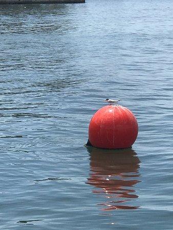 Bay Harbor Hotel: you see many wildlife here, birds, dolphins, manatees