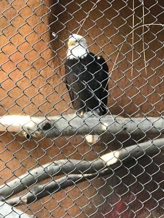 Santa Ana Zoo at Prentice Park: photo0.jpg