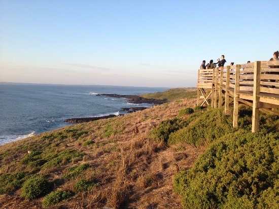 Cowes, Australia: The Nobbies Walk - part of the nightly penguins tour