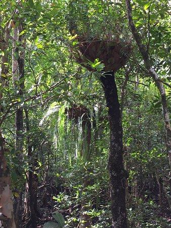 Daintree Region, Australia: photo5.jpg