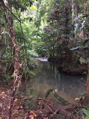 Daintree Region, Australia: photo9.jpg