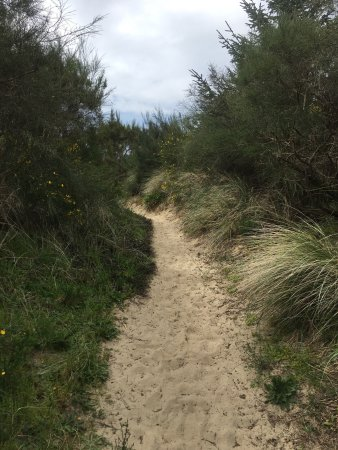 Oregon Dunes National Recreation Area: photo2.jpg
