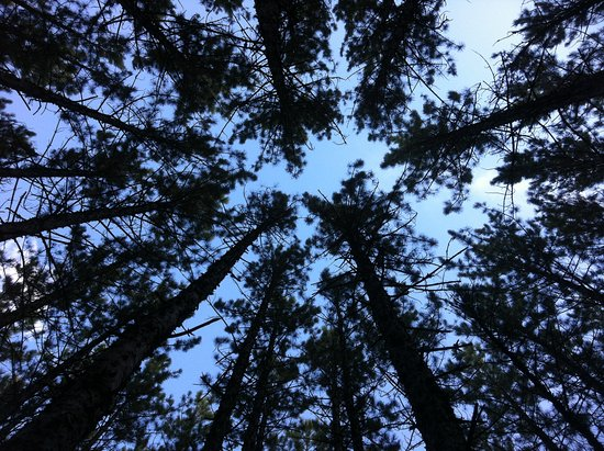 Falcon Lake, Canada: Looking up