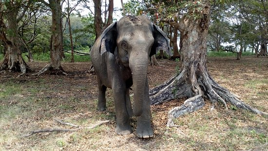 Habarana, Sri Lanka: Elephants rest in the middle of the forest
