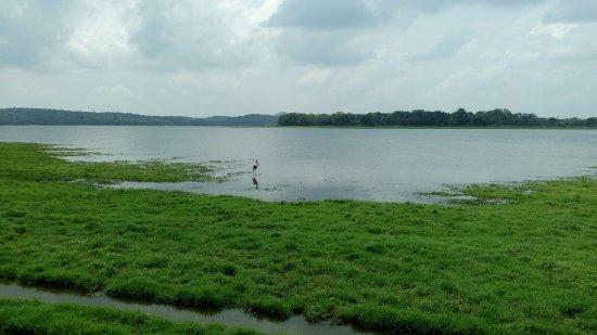 Habarana, Sri Lanka: Аист