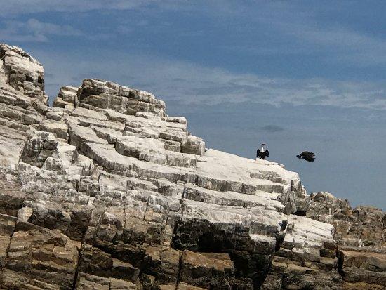 Port Elizabeth, Sør-Afrika: אי הפינגווינים