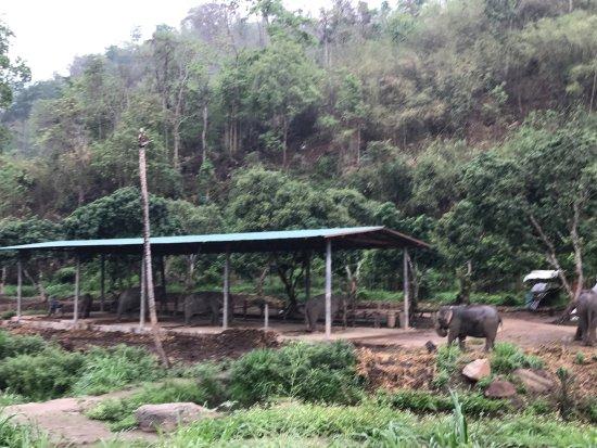 Mae Sot, Thailandia: All of the elephants