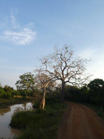 Tissamaharama, Sri Lanka: Yala Nationalpark