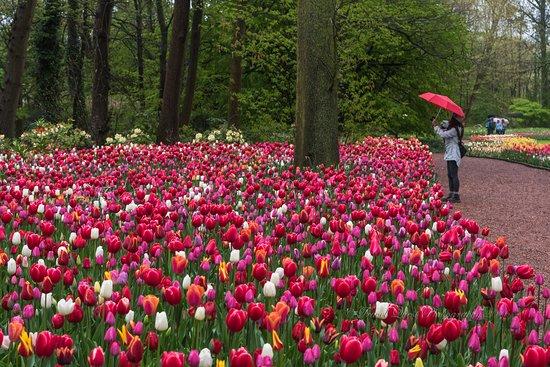 Groot-Bijgaarden, Belgio: photographing flowers 1
