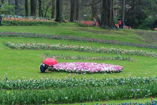 Groot-Bijgaarden, Belgium: photographing flowers 3