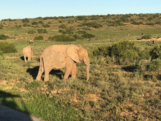 Addo Elephant National Park, แอฟริกาใต้: נוף בפארק