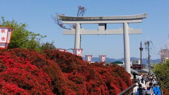 Nagaokakyo, Япония: 八条が池から望む鳥居とキリシマツツジ
