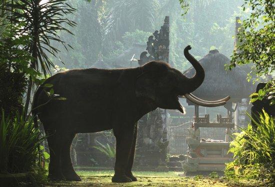 Tegalalang, Indonesia: Hindu Elephant