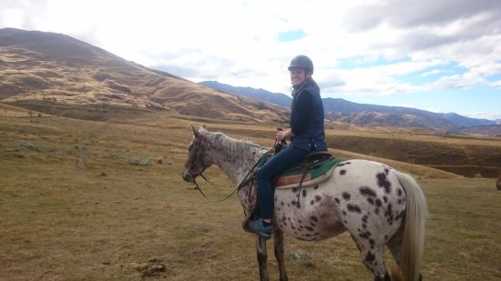 Wanaka, New Zealand: Well-trained horses