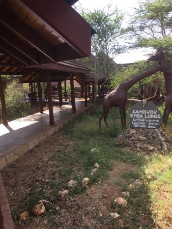 Buffalo Springs Game Reserve, Kenya: photo7.jpg