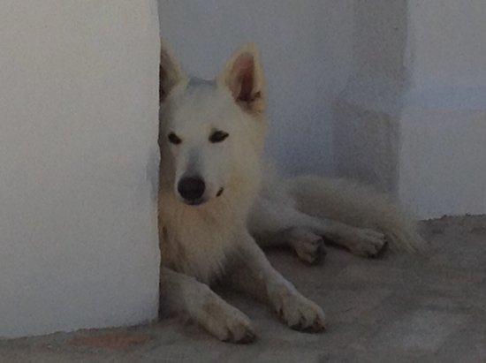 Alcala del Valle, Spain: Sam, best dog ever!