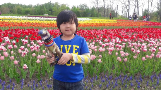 Takino Suzuran Hillside National Park: 1492939055339_large.jpg