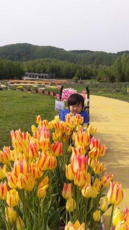 Takino Suzuran Hillside National Park: 1492939046899_large.jpg