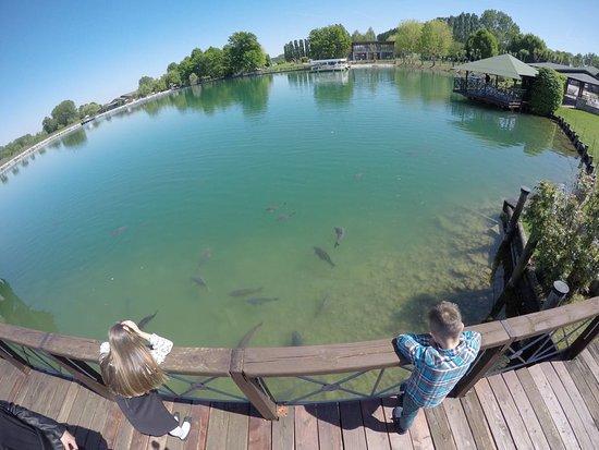 Lago dei Salici: IMG-20170417-WA0008_large.jpg