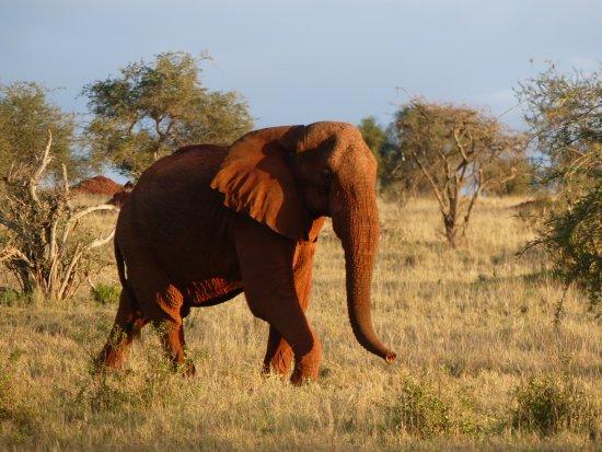 Robert Safaris Adventure Day Excusions : Elefant in den Taita Hills