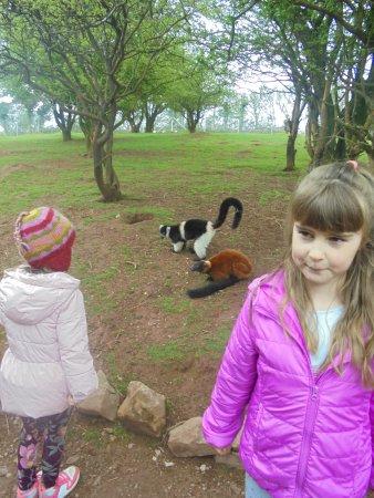 Dalton-in-Furness, UK: Girls having fun