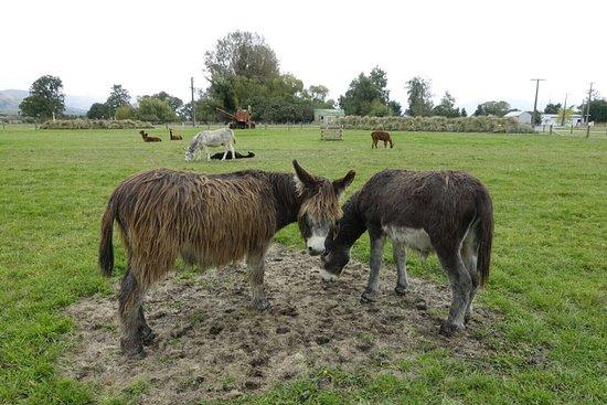 Fairlie, Nuova Zelanda: photo7.jpg