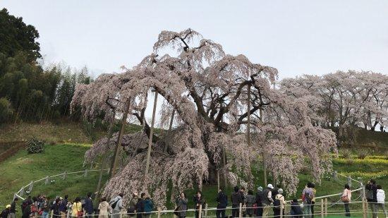 Miharutakizakura: photo0.jpg