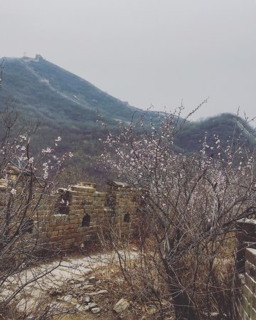 The Great wall of Jiankou-The Great Wall Alternative : Overgrown wall