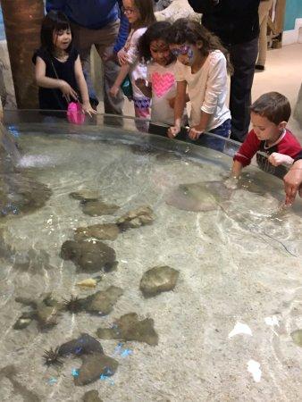 Adventure Aquarium: shark touch