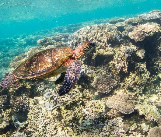 Coral Bay Photo