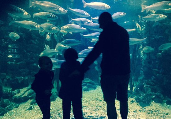 Brynsiencyn, UK: Family up close with the fish!