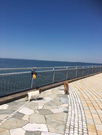 Sodegaura Ocean Park: photo4.jpg