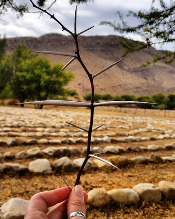 Prince Albert, Afrika Selatan: MyShire Labyrinth