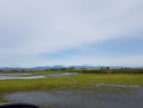 Willows, CA: marsh