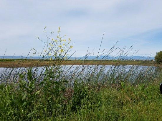 Willows, CA: Beautiful scenery
