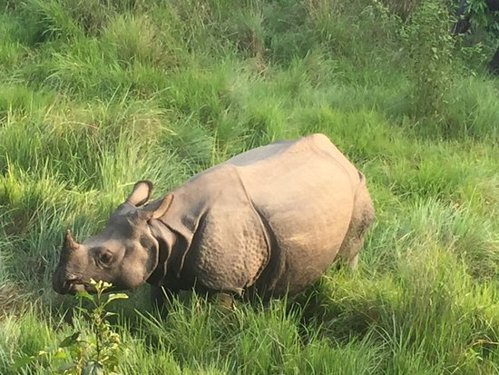 Kathmandu Valley, Nepal: Nashörner sieht man beim Ritt durch den Dschungel immer