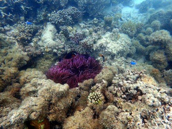 Fafa Island, Tonga: Hausriff