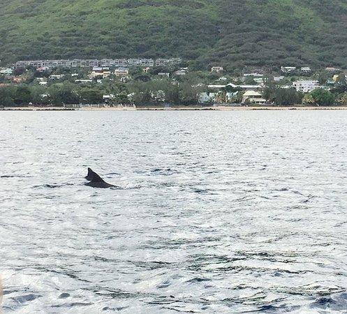 Grande Riviere Noire: dauphins souffleurs