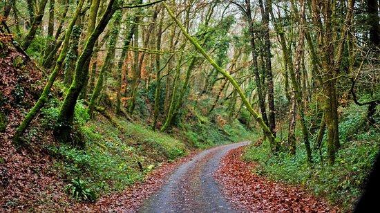 Plym Bridge Woods: Paths