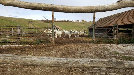 Bükkösd, Magyarország: Okopark Bukkosd
