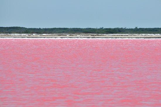 Rio Lagartos, เม็กซิโก: Pink Lagoon