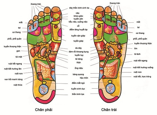 Foot point acupressure is really good for every parts of your body ...