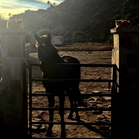 La Mision, Mexique : Back at the ranch